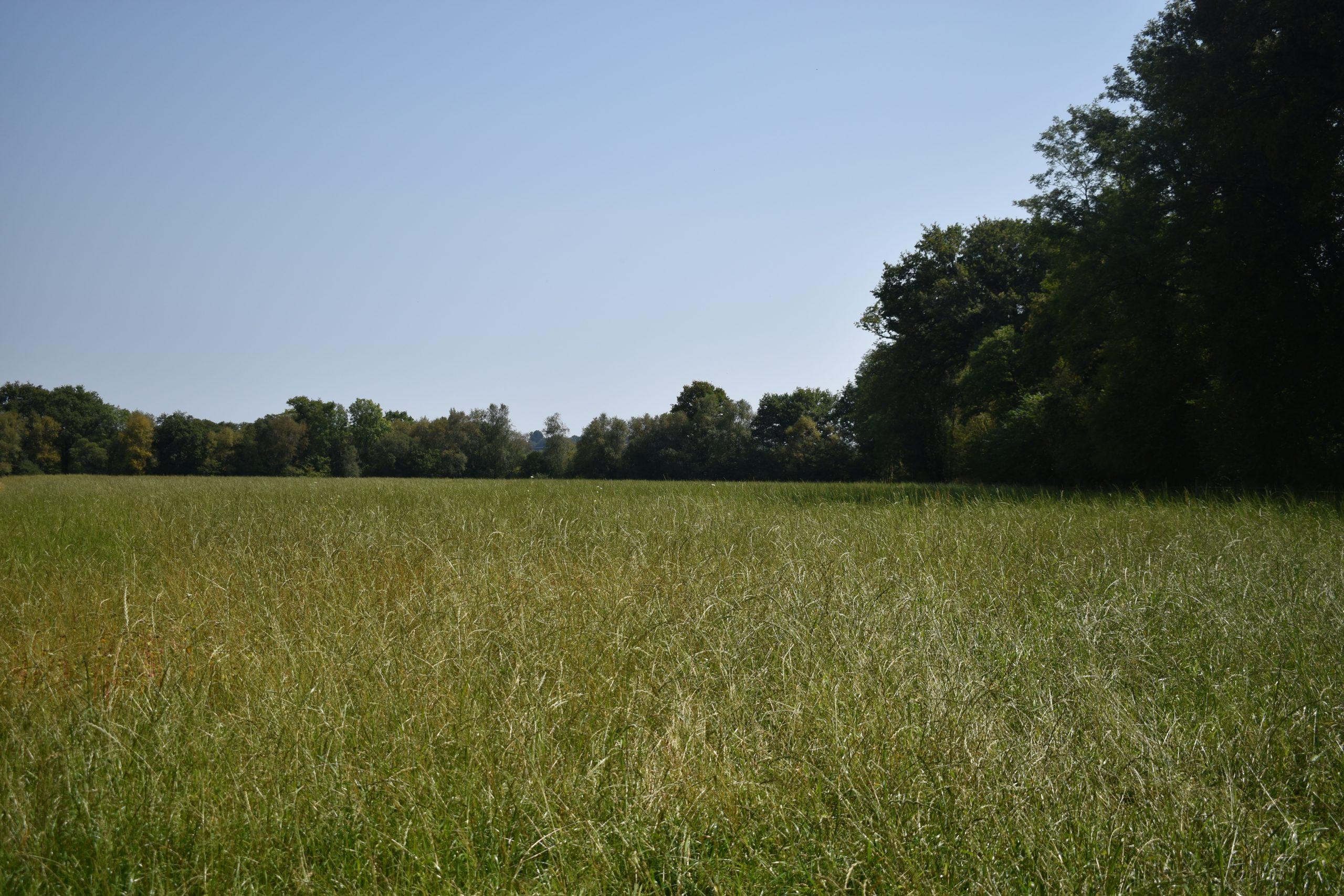 Centre équestre, pension, gîte sur 14 ha – Secteur de Plouay (56)